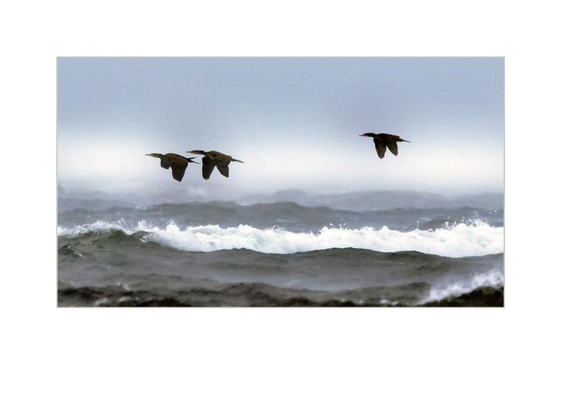 Regnfåglar